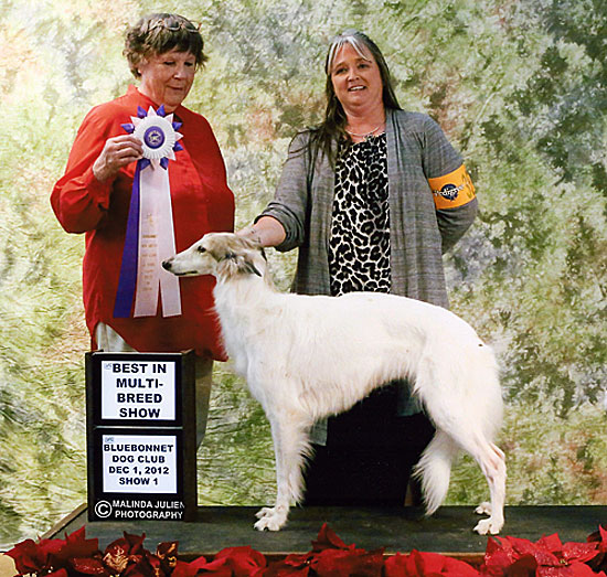 Best in Show Silken Windhound Siren