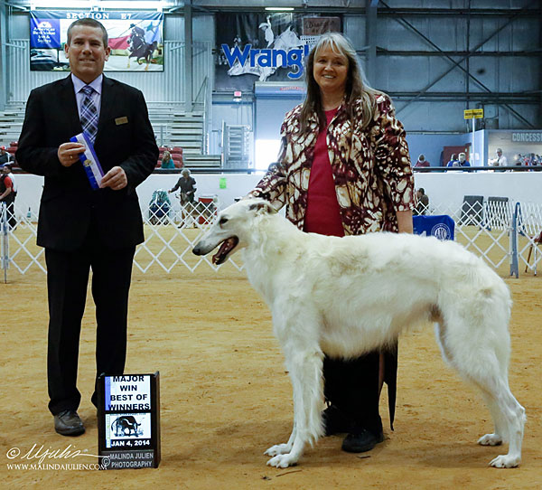 Borzoi Beast's 3rd Major win