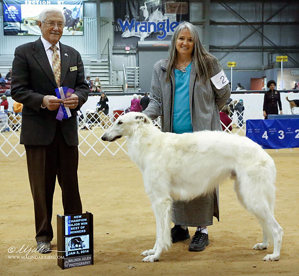 Borzoi Beast finishes his championship