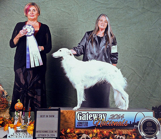 Deuce is awarded Best in Show at the 2014 UKC Gateway Shows