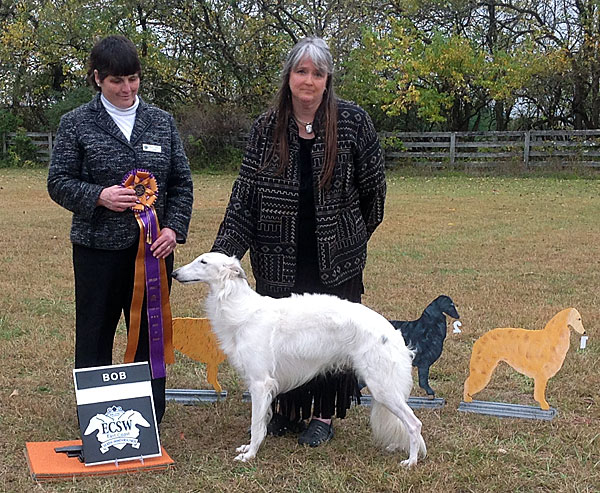 Deuce goes Best in Specialty at the 2014 East Coast Silken Windhounds Specialty Show