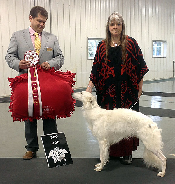 Deuce is awarded Best Opposite in Specialty on day 2 of of the East Coast Silken WIndhound specialty shows