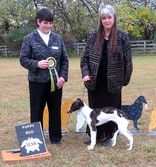 Farrah is awarded Best Opposite Puppy in Specialty at the 2014 East Coast Silken Windhounds specialty show (day 1)
