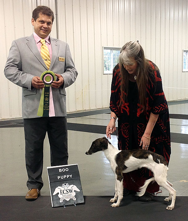Farrah goes Best Opposite Puppy in Specialty at the 2014 East Coast Specialty Show (day 2)