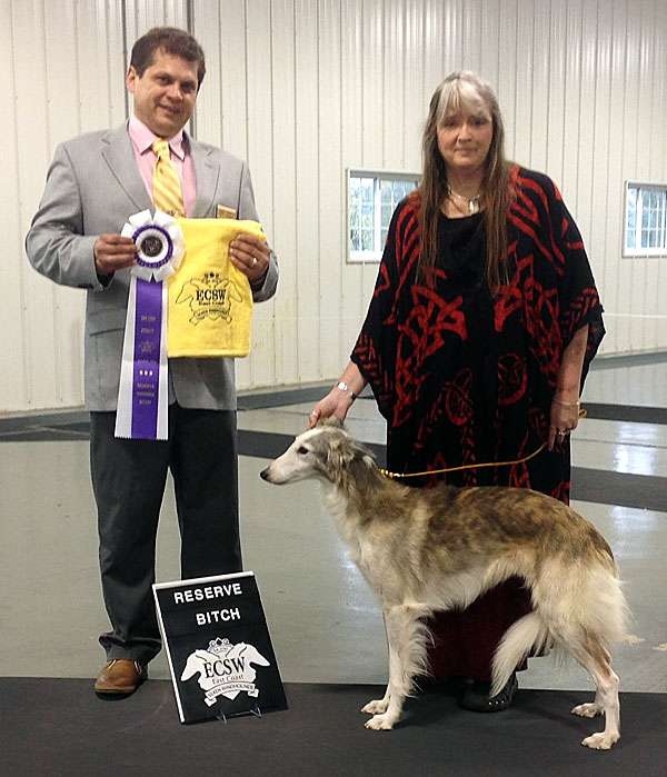 Jules takes Reserve WInners Bitch at the 2014 East Coast Silken Windhounds specialty show (day 2)
