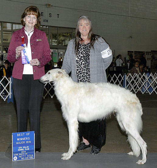 Borzoi Beast wins his first points and Major