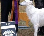 2014 East Coast Silken Windhounds Specialty Show