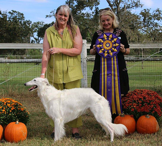 Deuce goes BISS at the Silken Windhound Texas Tapestry specialty