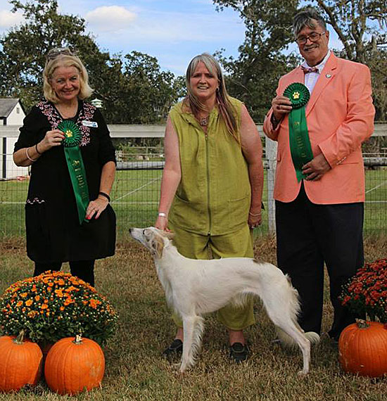 Puddin - double Best Bred by Exhibitor