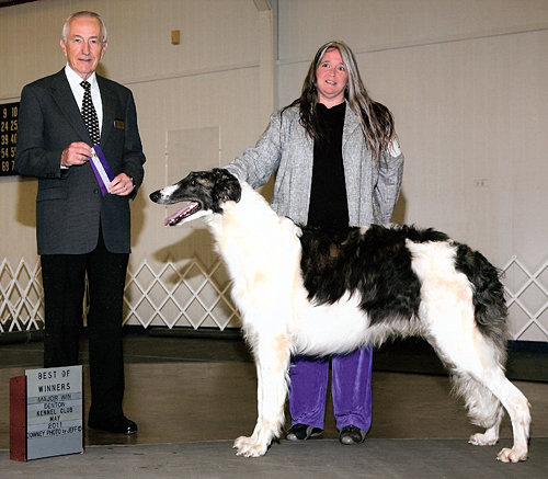 Fort Bend Kennel Club - A New Borzoi Champion for Gryffyn's Aeyrie!